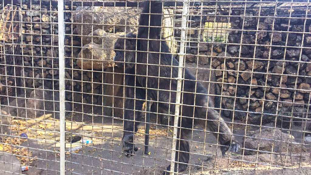 Jos Zoo