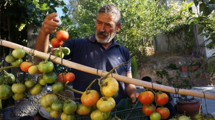 Joaquin hanging tomatoes Caseria Del Mercado