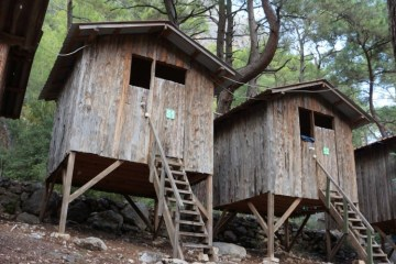 Saban Tree houses