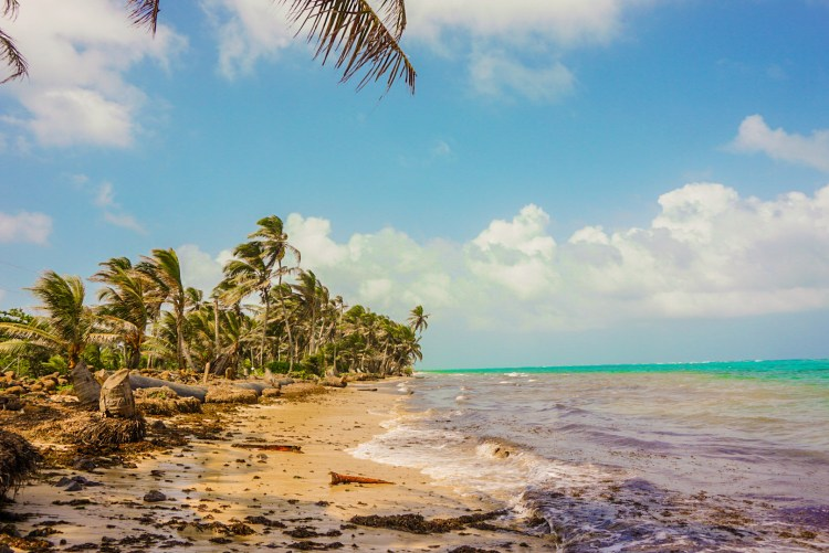 Land for Sale on Little Corn Island 7