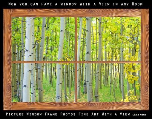 aspen tree forest rustic wood picture window frame 600mark 509x400 Praying Monk BW Lightning