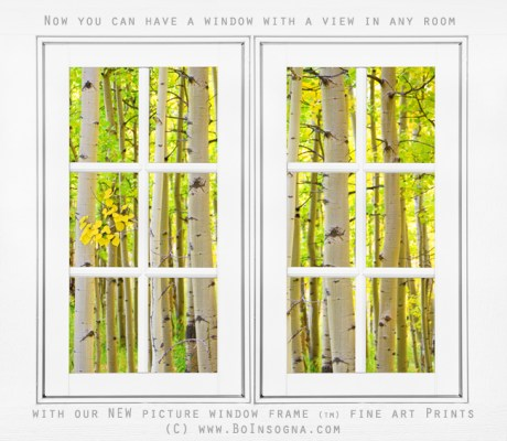aspen forest white picture window frame view600m 460x400 Colorado Red Barn