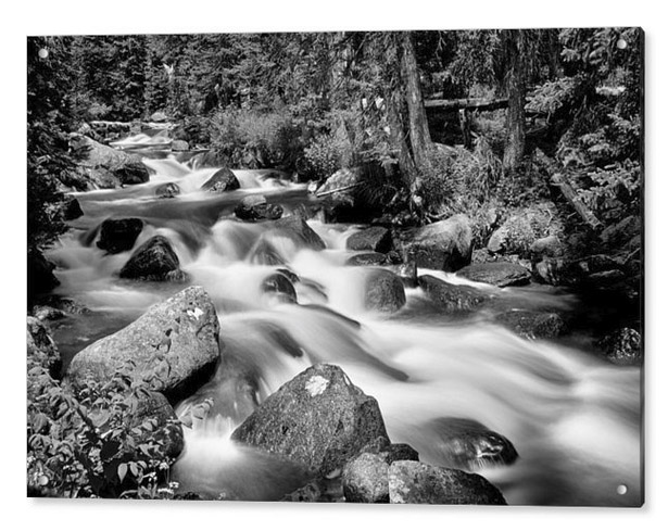 Cascading Rocky Mountain Forest Creek Bw Acrylic Print