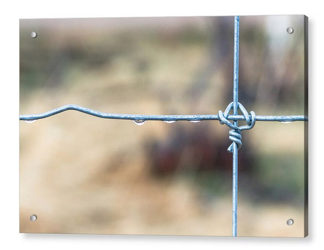 Wire Fence Acrylic Print