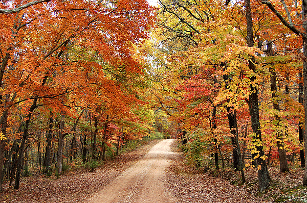 Colorful Fall Scene Wallpaper Autumn Country Road Photograph By Edward Loesch