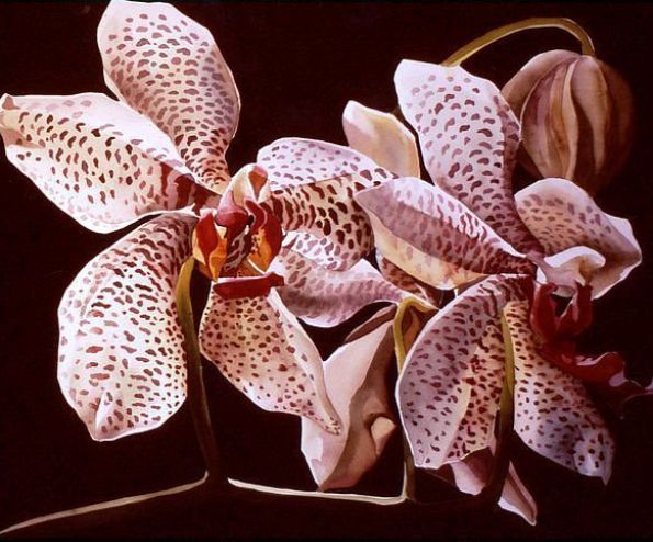 orchid-watercolor-paintings