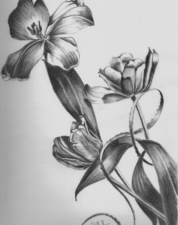 Easy Drawings Of Flowers In Pencil Floral Pencil D...