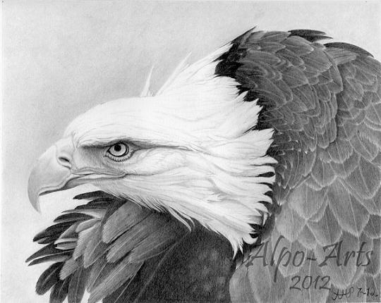 Realistic Pencil Drawings of Birds