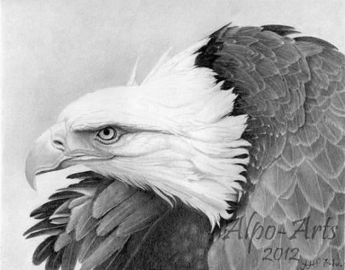 bird-neck-pencil-drawing