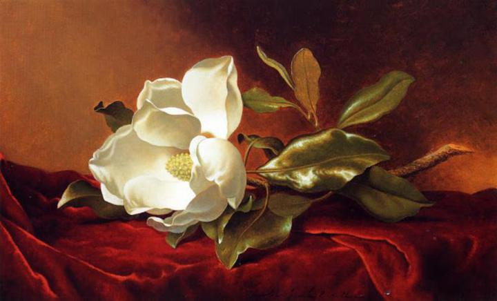 martin-johnson-heade-magnolia