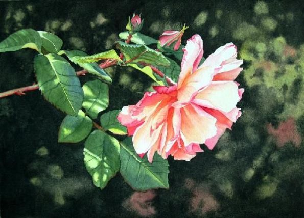 watercolor-rose