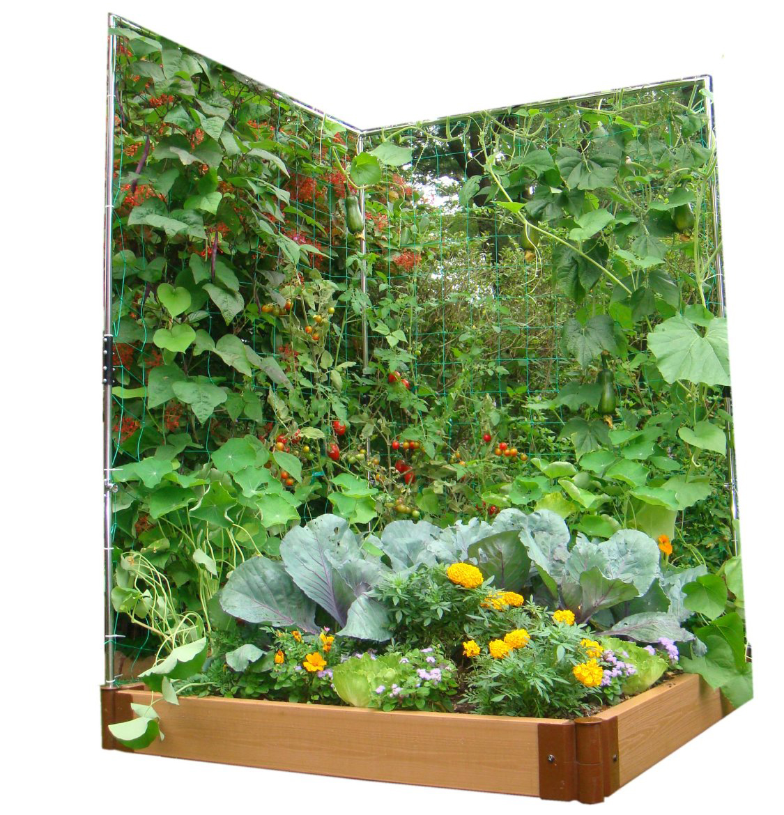 Vertikal Gardinen 9 43 Vegetable Gardens Using Vertical Gardening Ideas