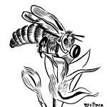Beemask, a response to the bee killoffs in Wilsonville Oregon and Elmwood Canada due to pesticide use.