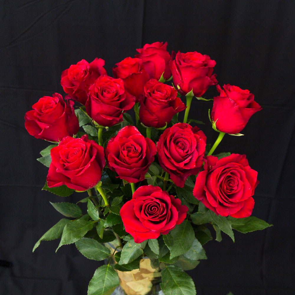 Rose Red Roses 13 Pieces