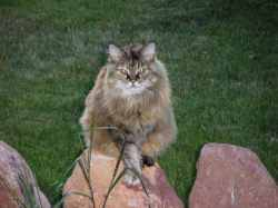 Pristine Fox Valley Humane Ociation Rehoming Ings Cat Growls When Doorbell Rings Cat 2017 Fox Valley Humane Society Rehoming Fox Valley Humane Society