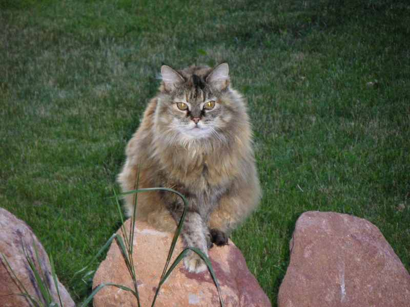 Large Of Fox Valley Humane