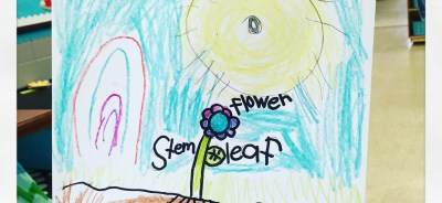 flower directed drawing