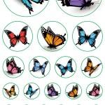 פרפרים בגדלים שונים
