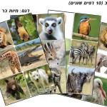חיות בר מצולם
