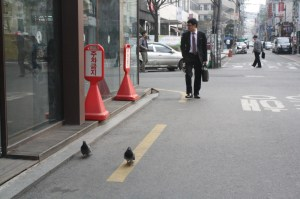 You can walk around Seoul easily. You'll even find lots of birds on the streets.
