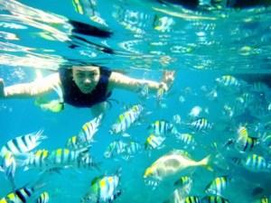 School of fish in Anilao, Batangas.