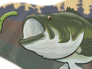 fish-940