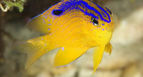 The 10 Best Saltwater Fish For Beginners - Fishkeeping Advice