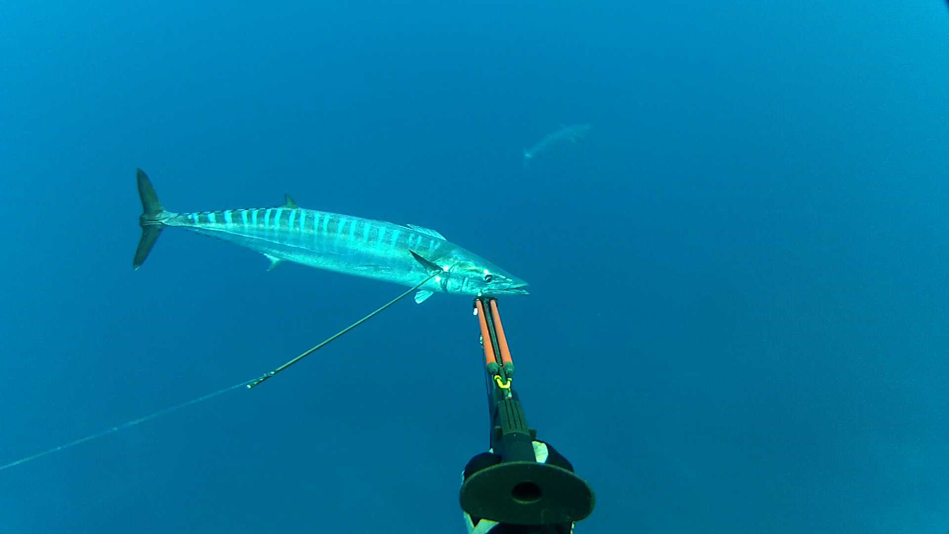 Very Nice Girl Hd Wallpaper Maui Spear Fishing Guides And Information
