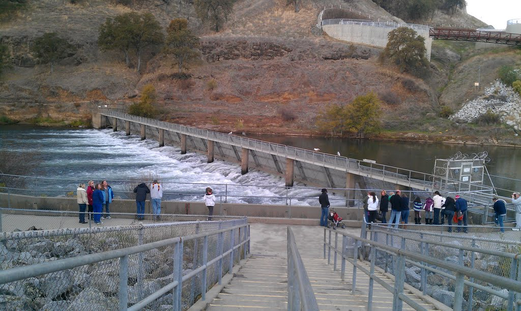 Nimbus Fish Hatchery Ladder Opened Nov. 2