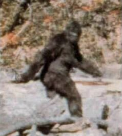 Frame 352 from 1967 Patterson–Gimlin film; some claim it shows a Bigfoot, and others a man in a gorilla suit.