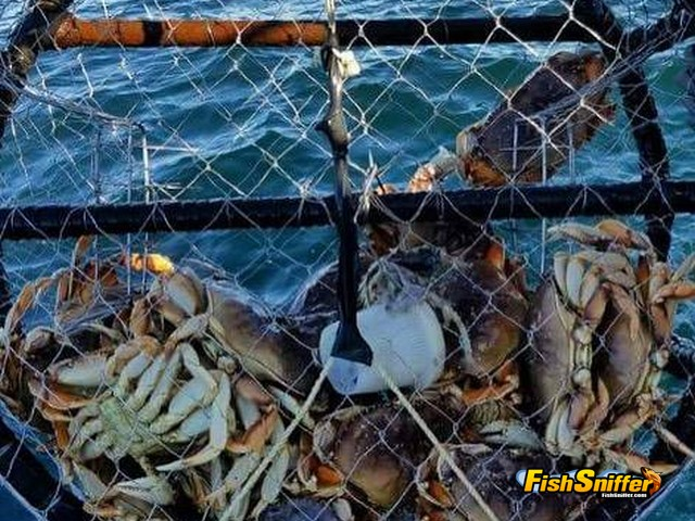 crab pot_web