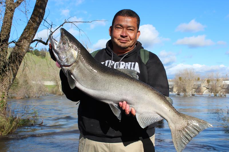 James Lovejoy of Folsom shows off a beautiful 16 lb. king salmon that he landed in Nimbus Basin on December 16.