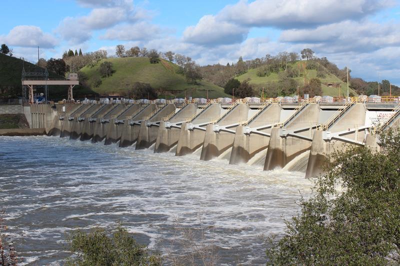 High flows draw some steelhead into american river for Nimbus dam fishing