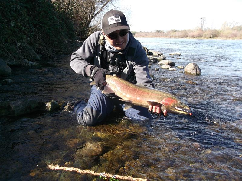 High flows draw some steelhead into american river for American river fishing
