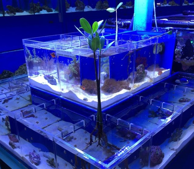 Saltwater fish store near me and aquarium is tropical for Local fish store