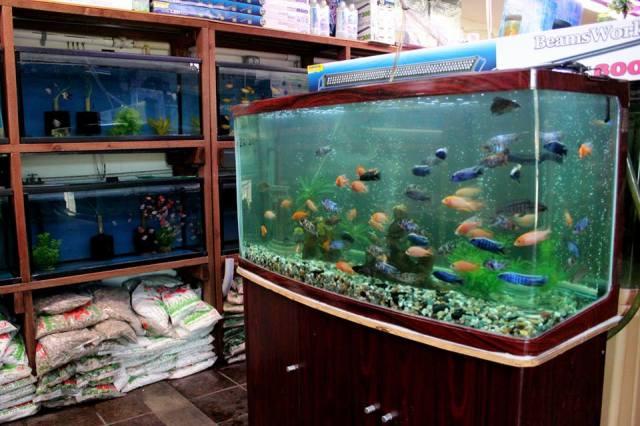 ... fish, coral, live rock, and aquarium supplies 2017 - Fish Tank