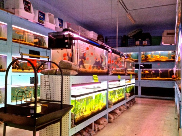 Aquarium supplies near me aquariums for saltwater fish for Where to buy fish near me