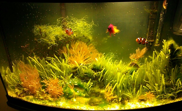 My saltwater tank is getting overrun with algae. I remove handfuls of