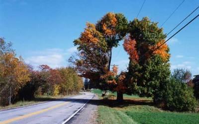 tree-cutting-workaround