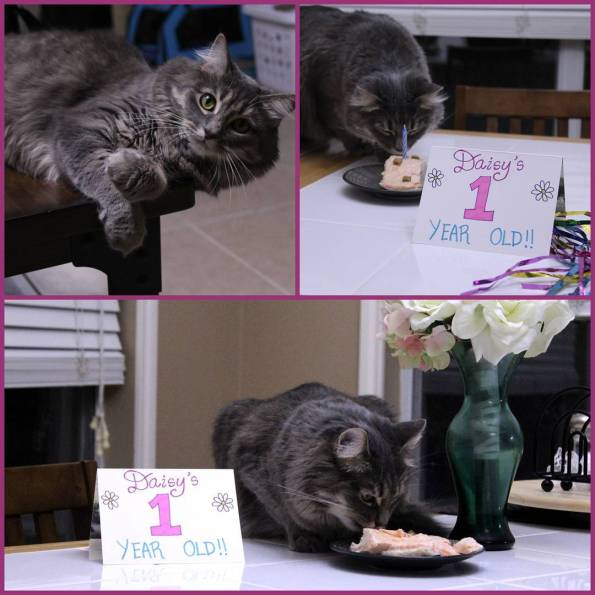 Look whos 1 now! Daisy May celebrated turning 1 todayhellip