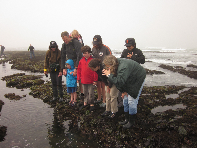 Low Tides @ Friends of Fitzgerald Marine Reserve