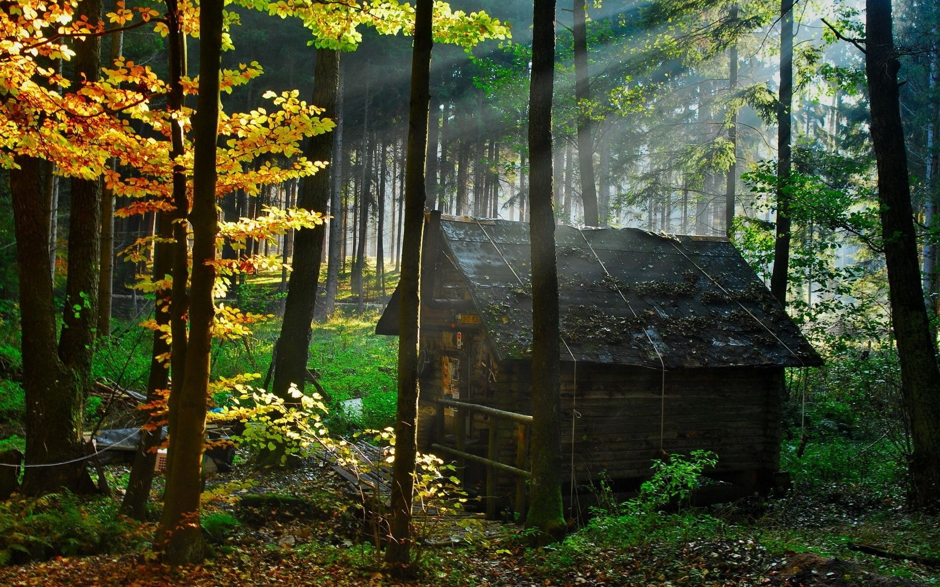 Houses In The Forest Peace In The Witchs Cottage Five Ages