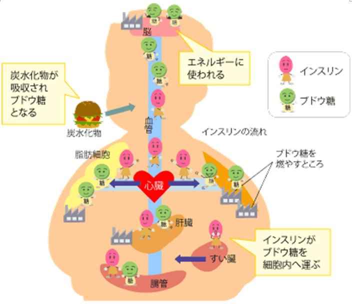 insurintoka