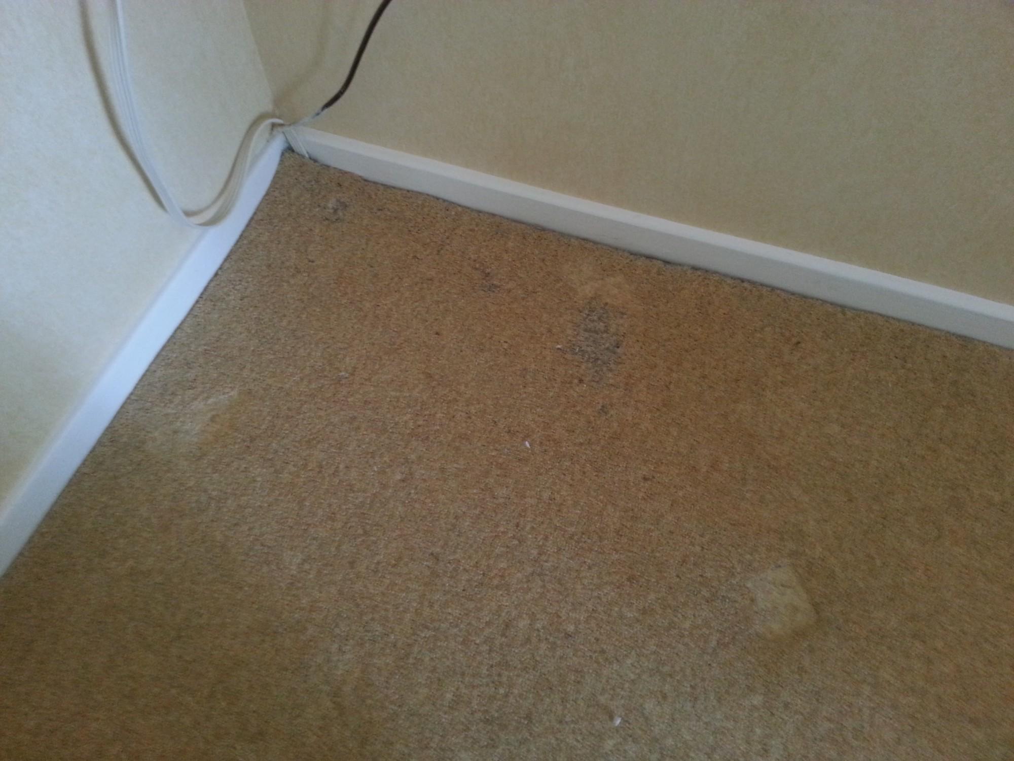 Do My Carpets Have Carpet Moth Five Star Furnishing Care
