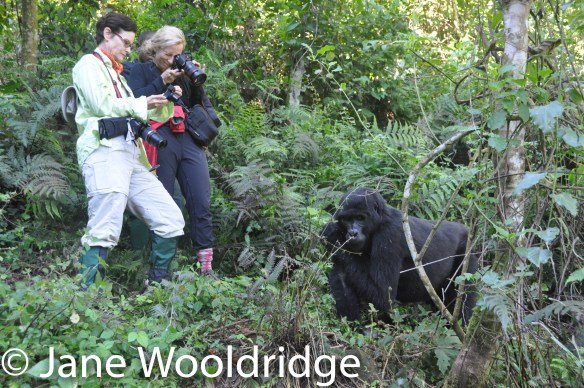 In Uganda: Trekking with mountain gorillas