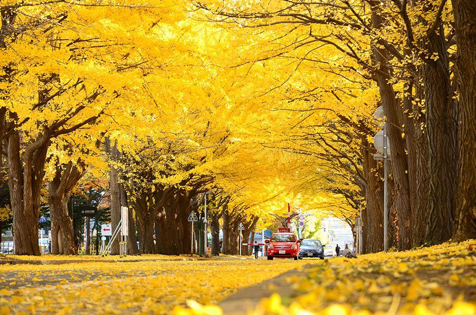 Fall In Boston Wallpaper 15 Of The World S Most Beautiful Tree Tunnels And How To