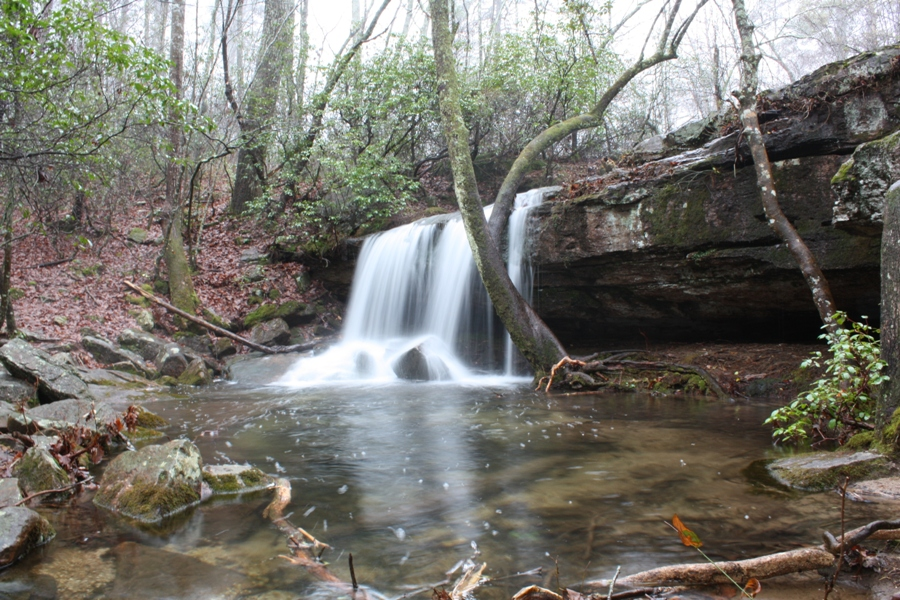 Scout In 10 Of The Best Hiking Trails In Alabama - Flavorverse