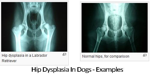 Signs Of Hip Dysplasia In Dogs Supplement Treatment