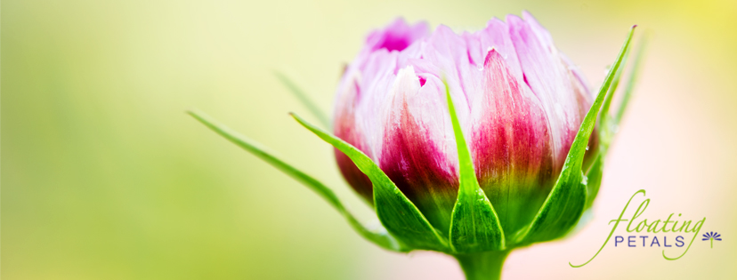 Floating Petals Membership Floral Photography and Reflections