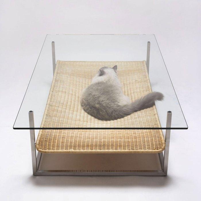 貓咪頓時成為桌上擺飾